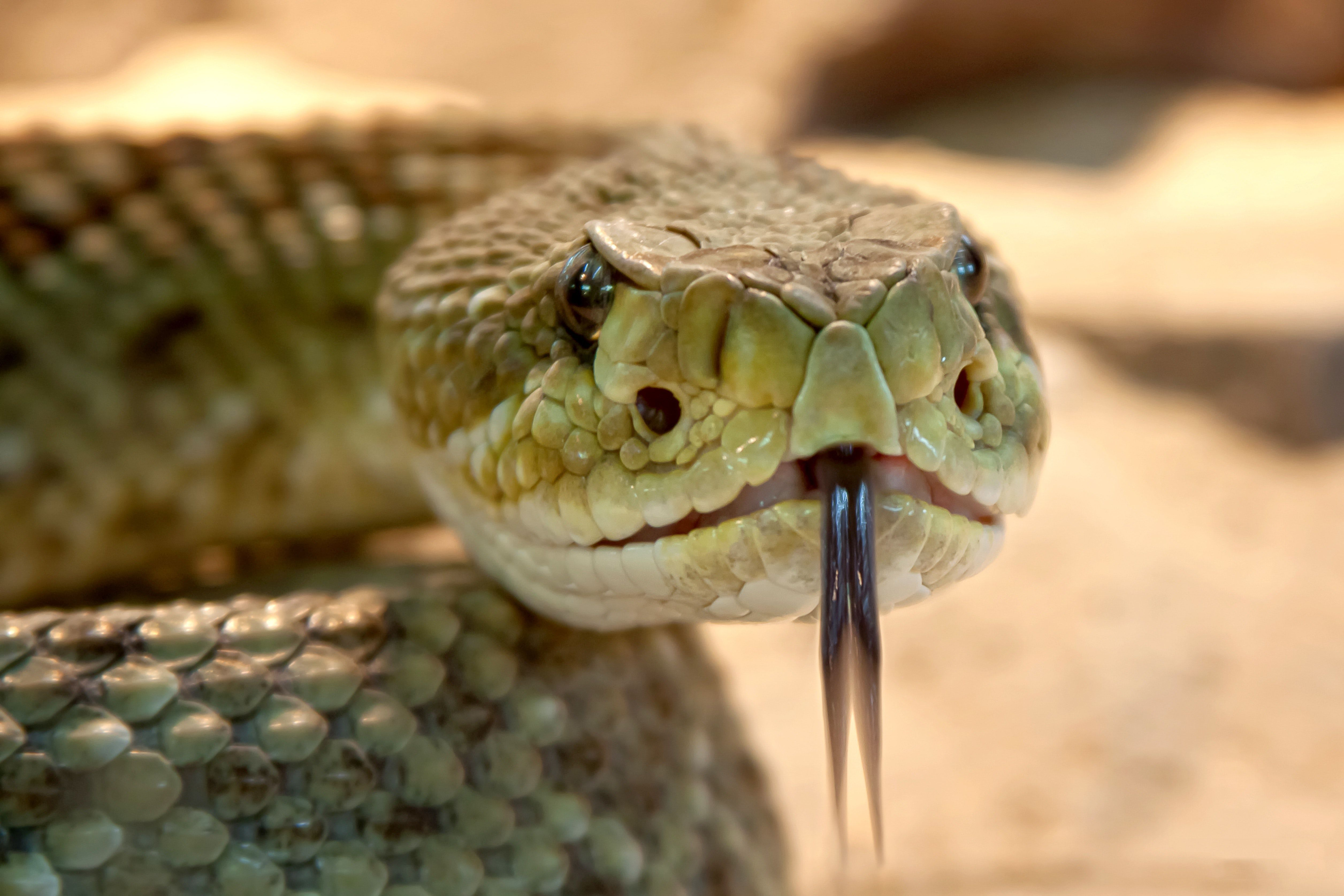 Prevent reptile attacks from derailing your case